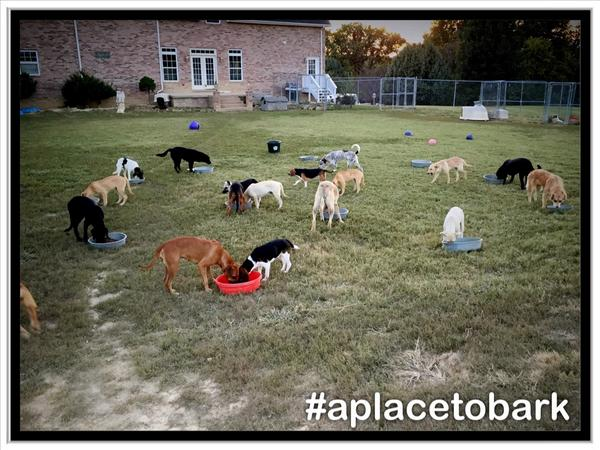 Dinner time at #aplacetobark:) Once homeless & discarded lives, now Loved & being taught manners & ready for Adoption http://t.co/ICbpFLuzYk