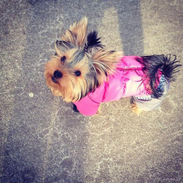 Алиэкспресс одежда для собак для йоркширский терьер