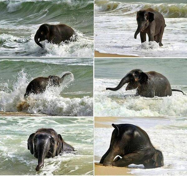 Baby elephant meets the sea for the first time! http://t.co/A7mrVq8HUy