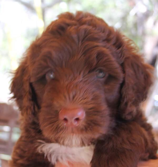 Can't wait to see my new pup next week�� http://t.co/KCIGykIXxf