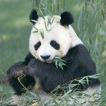 RT @itele: En 40 ans, laction de lhomme a entraîné la disparition de la moitié des animaux sauvages de la planète (bilan @WWF) http://t.co/twKVmVAfIN