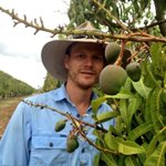 Matt from @BlueSky_Produce looking forward to these R2E2 #mangoes filling out in nxt 2mths #Mareeba #mango #country http://t.co/8CbH9pT4JZ