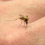 RT @elheraldoco: Ya van 5.571 casos de Chikunguña en la Costa Caribe, según el INS http://t.co/XE0Gh2krjZ http://t.co/WlfXJbg0W1