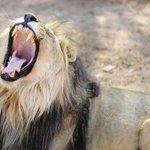 RT @lemondefr: La Terre a perdu la moitié de ses animaux sauvages en 40 ans (par @audreygarric) http://t.co/WtBqoEbPIo // http://t.co/3WwrgLNkPB