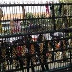 RT @kompascom: Gantung Pakaian Dalam di Pagar, Belasan Ibu Tuntut Kejagung Tangkap Jokowi http://t.co/y2TQaDLQ86 http://t.co/ER9zOwO4RP