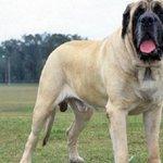 Konsumsi Daging Anjing Bisa Timbulkan Penyakit http://t.co/qO5i8EyCHv http://t.co/j6WfM9bYKU