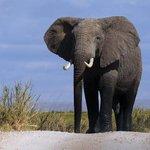 Deux fois moins danimaux sauvages: «Ces dégâts sont la conséquence de notre mode de vie» http://t.co/JWTt7feWgx http://t.co/AIKkgdaH5o