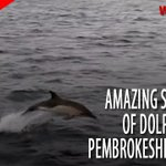 RT @WalesOnline: Watch 1,000 dolphins swimming off Pembrokeshire... and immediately feel your mood improve http://t.co/430il7l1X3 http://t.co/4I3rRJ6oCw