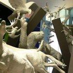 RT @TReporta: Hoy a eso de las 8:00 a.m se inaugurará el Museo de la Biodiversidad, cuya construcción inició en el 2006. http://t.co/D7YlQwb39B