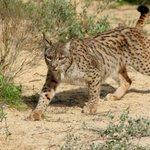 RT @tvnnoticias: Fauna silvestre baja a la mitad desde 1970. Más en http://t.co/KmxU8xEOwn #Internacional http://t.co/l3bUHt6OdW