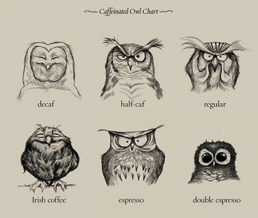 Ha ha RT @ZAGrrl: .@ajlucio5 Love these! Owl I need is coffee. Have a good one! :-) RT @Reverb #FunFinds #FF http://t.co/JReyO7Qf2h