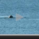 Cuatro ballenas francas se acercaron a la costa de Punta del Este. Mirá el video ► http://t.co/DMAYAvtPi6 http://t.co/YZ5DZsKhcG