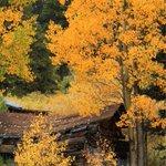 Slideshow: Send us your #COFall colors photos http://t.co/P0E9Cs3Nx9 #cowx http://t.co/8VuvBSJxGZ
