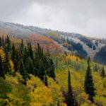 RT @skisteamboat: So many beautiful, colorful shots today. #SteamboatResort #snow #cowx #fallfoliage #winteriscoming http://t.co/qVTyKUak9r