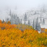 RT @theWXwoman: Tale of two seasons @SteamboatCO! Golden colors peaking w/ a wintry white blanket behind! Credit: Larry Pierce #9wx http://t.co/tzXrs5sUIc