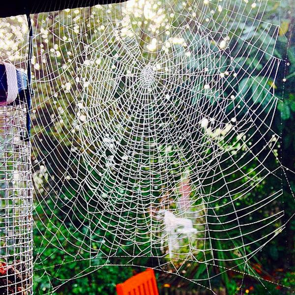 @BBCSpringwatch got this photo of two webs spun close together yesterday in the garden - they don't look real! http://t.co/mDKM6B0Hoj