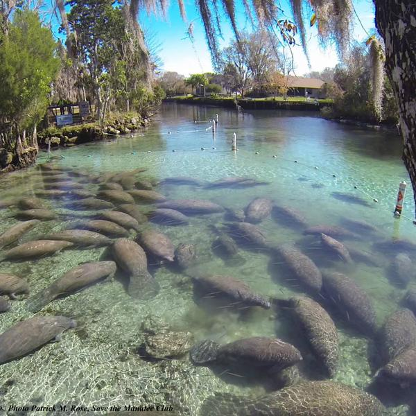 It's National Wildlife Refuge week! #seerefuges #refugeweek Photo taken at Crystal River NWR http://t.co/n0wJCTyMeF