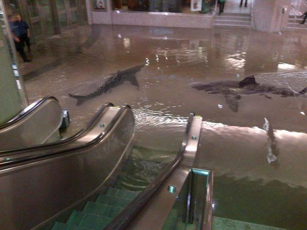 """#APOCALYPSE """"@DavidBerthold: Massive storms rage through Sydney flooding malls and releasing sharks into the city. http://t.co/1k61FqQYXf"""""""