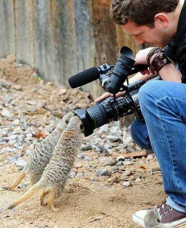 Que el único disparo que reciba un animal, sea el de una cámara. http://t.co/pKW8Ly9XAe