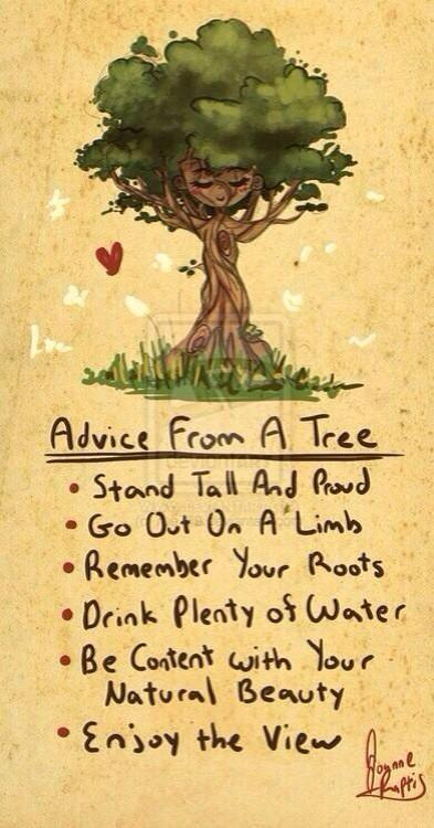 Advice from a tree: http://t.co/SZe8br4Wah