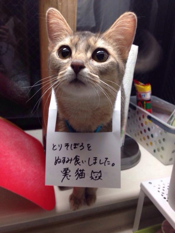 かわいすぎる! RT @HamuCamen 実家の猫がまたやらかしたようで http://t.co/K6K5S2NxQ2