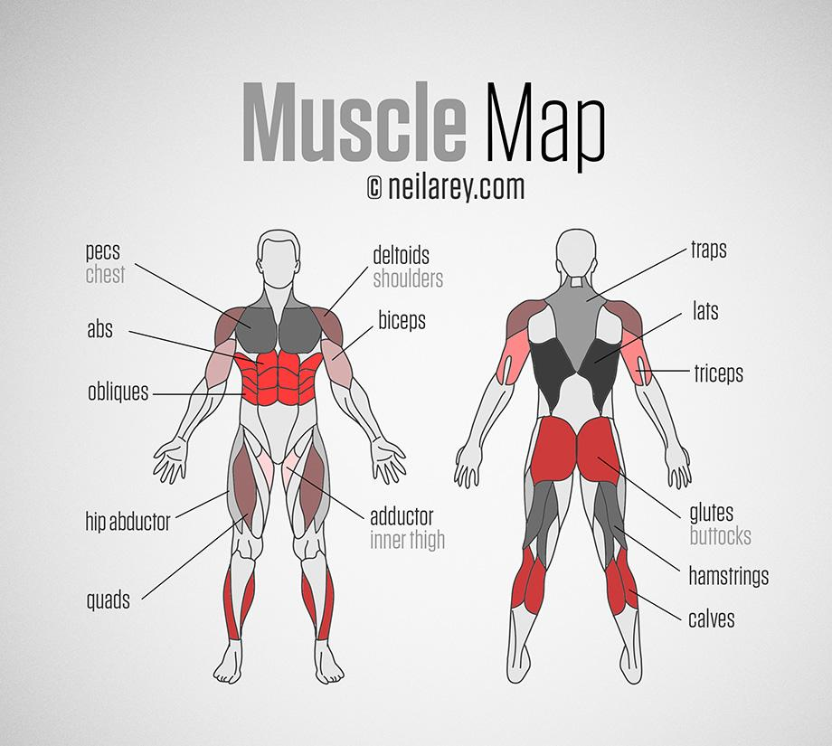 Exercise anatomy chart