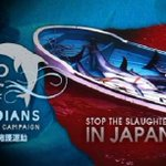 .@ladygaga pls be a voice to HELP #coveguardians DEFEND #tweet4Taiji DOLPHINS http://t.co/CmaPmNae2F… http://t.co/AnnIejm1QV