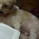 Shhh my baby's busy reading her fav book... http://t.co/P6tjmvvsUK