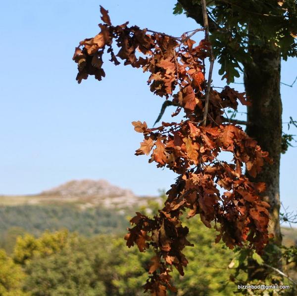 #Sheepstor #Dartmoor #Autumn http://t.co/WMAw6rVTvg http://t.co/sJhvGwWPDH