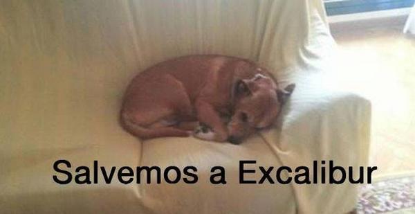 #SalvemosaExcalibur #AnaMatoDimision  #fb http://t.co/JFwz5ih7b0