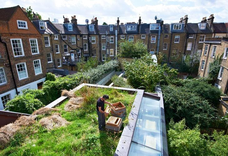Dubbel #duurzaam; #groen dak met #bijen @PvdDAmsterdam @Groengrut @liefsvanimmeke @natuuronline @Natuurvisie2014 http://t.co/O5QXrvOGae