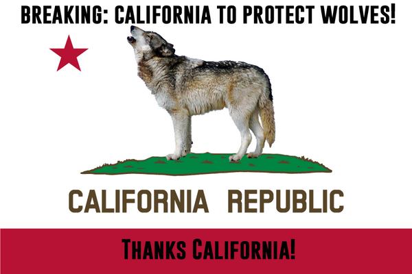 Great news: California Fish & Game Commission officially approved protecting wolves in the state today! #stand4wolves http://t.co/23JpWGHEKU