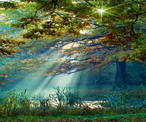 """""""In the woods, we return to reason and faith."""" ~ Ralph Waldo Emerson #quote http://t.co/cf9dckU2JR"""