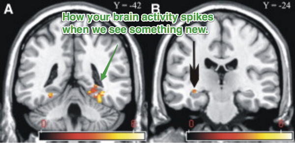 Hmmmm--Why Getting New Things Makes Us Feel So Good: Novelty and the Brain http://t.co/5GY0zQqyPr http://t.co/LKINJpmd9T