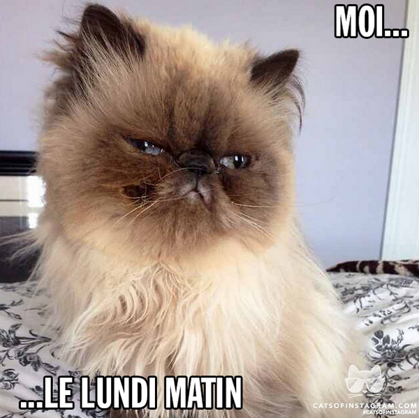 Moi Le Lundi Matin Scoopnest Com