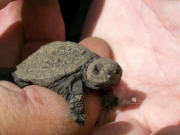 Please remember to vote *EVERY DAY* this weekend to save #OntarioTurtles! http://t.co/JITOyIYsgi http://t.co/BDPtZBOLj5
