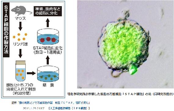 STAP細胞の作り方とがん細胞の発生は似ている?! STAP現象が世に出てはまずい本当の理由はここにあった~現在の製薬・医療システムが役に立たないどころか不要になるから http://t.co/ybVjk9pl0j http://t.co/inyTQWm0nk