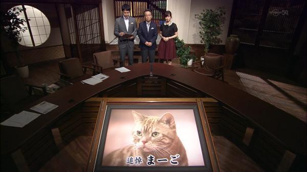 猫ニュースキャスタのまーごさん死んでしまった( ;  ; ) http://t.co/hF9FU1prXc