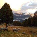 "RT @YoPromuevoChile: ""@dloslagos: ""@YoPromuevoChile: Provincia de Palena Región de Los lagos #Chile @SernaturLagos @sanivett http://t.co/iUidM5ZP47""""/+1000"