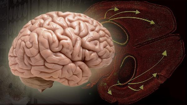Científicos logran borrar recuerdos con luz en ratones http://t.co/mynbbA3cq5 http://t.co/LTfOPtCR95