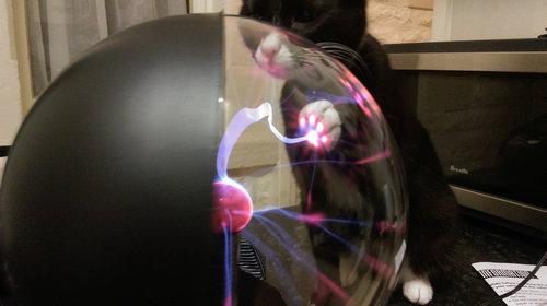 「猫がプラズマボールに触れると…こんな風になるのか!」SFチックな1枚 http://t.co/XvUOfeIMMI @lbqcomさんから http://t.co/QpDM0wEIjD
