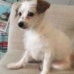 Missing rescue dog found, wasn't stolen