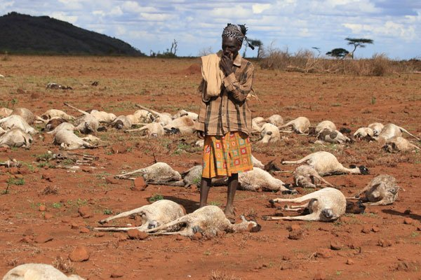 Pastoralists counting loses after floods ravage Marsabit County
