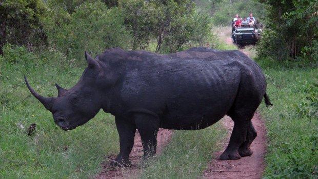 Rhino horn stolen from University of Vermont, reward offered