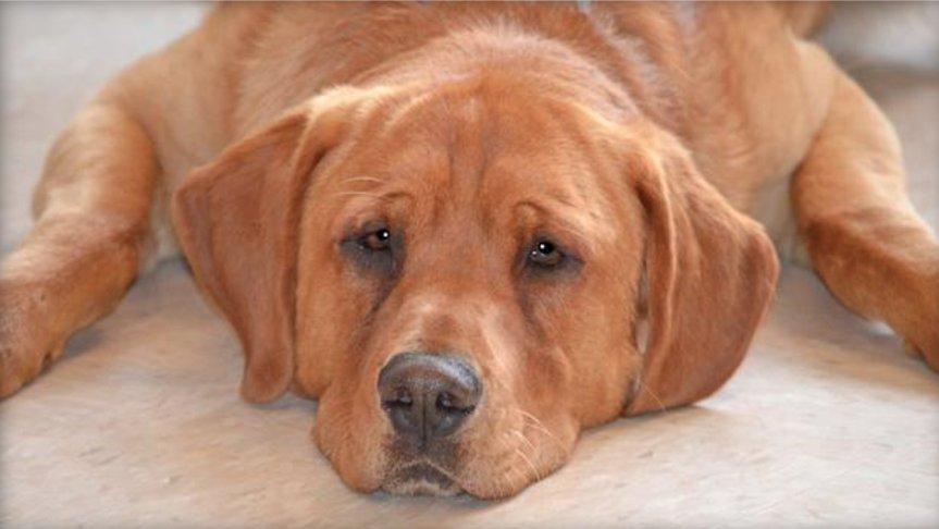 NBA coach adopts sad special-needs dog left behind at shelter