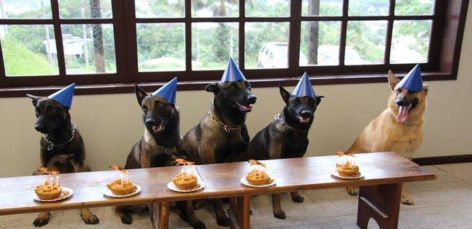 Cães da PM ganham festa de aniversário com direito a bolo em SC https://t.co/unNydJiqmo #G1
