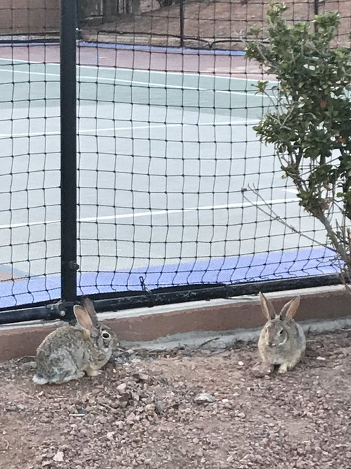 Playing basketball with these fans watching 😎🐰 https://t.co/DeCdqsG5h3