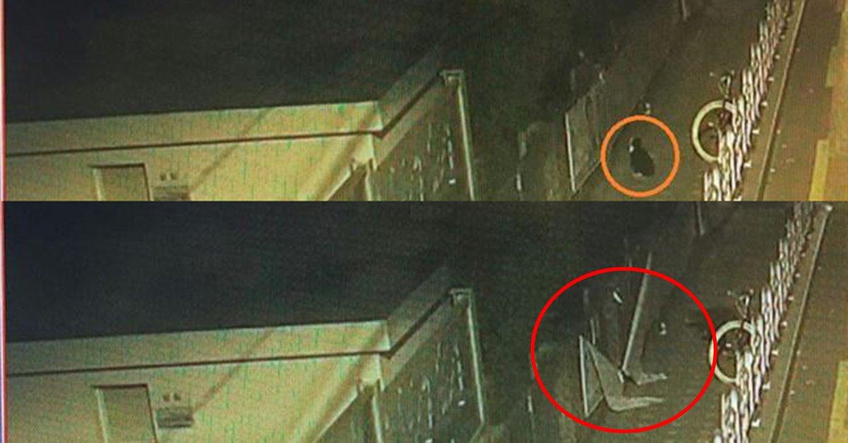'내가 지지하는 후보를 위해 그랬다냥!🐱'  선거벽보 훼손, 알고보니 '고양이' 소행? CCTV에는 물끄러미 선거벽보를 읽는 고양이 한 마리만 찍혔다  https://t.co/2ohPpWxfyt