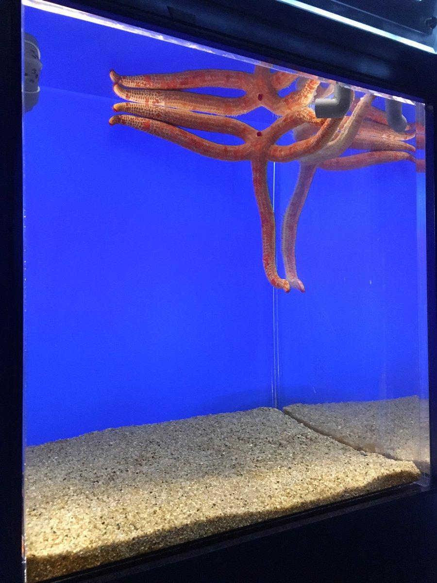 水族館に行ったらハンターハンターでウイングの強い念を受けた際に思わず防衛本能で部屋の隅に退避したキルアみたいなヒトデがい