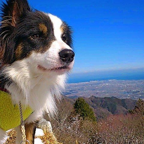 登山ワン🎵#登山 #登山犬 #山岳犬 #青空 #最高 #三重県 #松阪市 #堀坂山 #ヤマノススメ